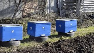 20.02.2018  подкормка пчел медем