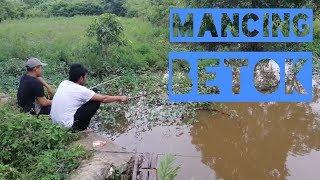 preview picture of video 'Keseruan Angler Rantau Mancing Ikan Betok Atau Papuyuh'