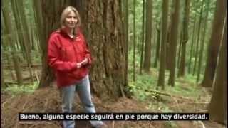 """""""La Comunicación de los Árboles"""""""