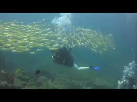 Fish Storm dive at Phi Phi Island