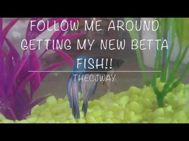 Follow Me Around Vlog: Getting My New Betta Fish!