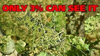 Most AMAZING Animal Camouflage In Nature!