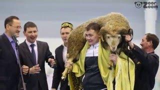 Балтач муниципаль район башлыгы призына үткәрелгән XX татарча көрәш бәйгесе. Финал