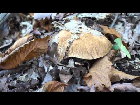 Trattamento di un fungo di unghie da frazione