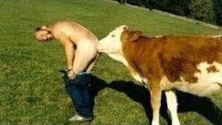 Американская подборка приколы с животными. The American compilation jokes with animals.