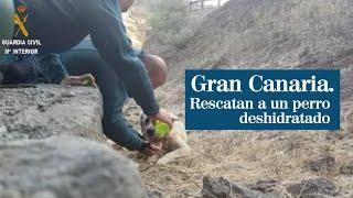 Incendio Gran Canaria: rescatan a un perro deshidratado en Tejeda