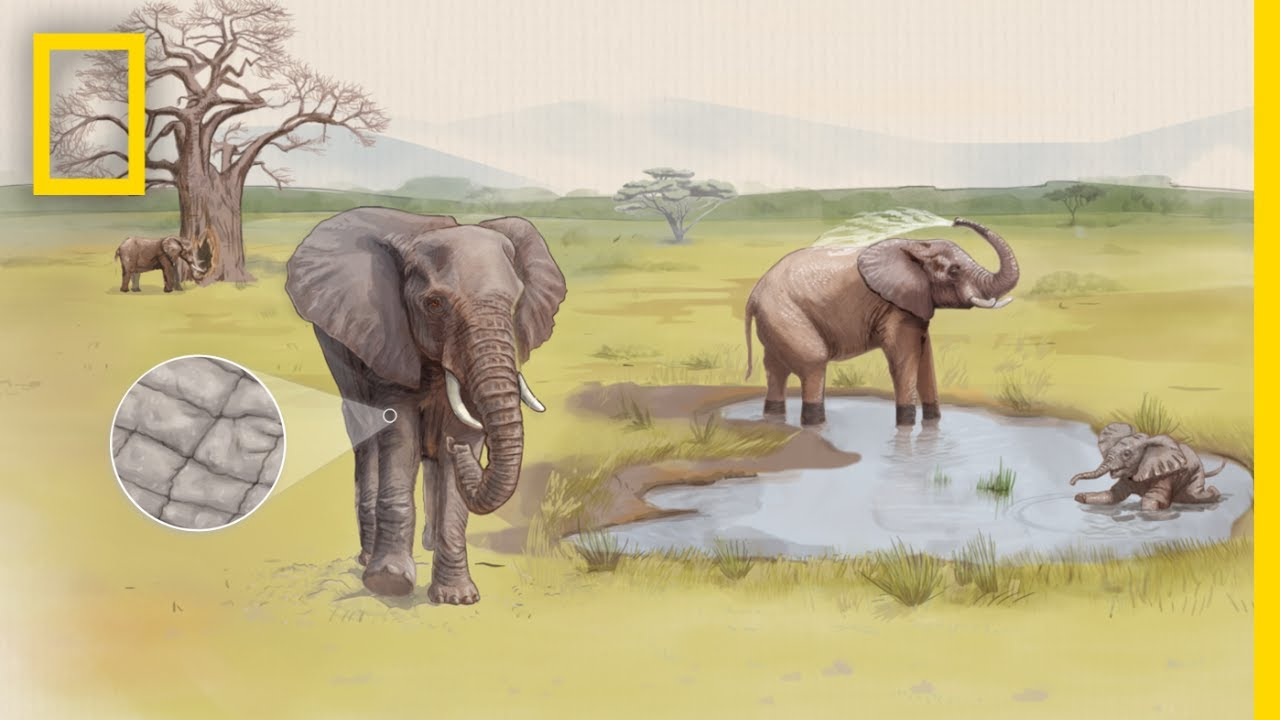See How Cracked Skin Helps Elephants Stay Cool | Decoder thumbnail