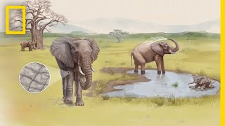 See How Cracked Skin Helps Elephants Stay Cool   Decoder