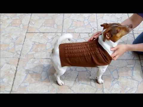 Hundepulli stricken
