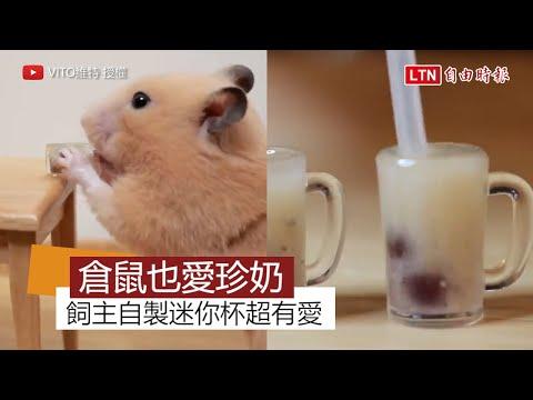 如何自製迷你珍珠奶茶给仓鼠喝