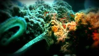 """underwater"" videosub"
