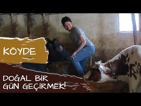 Acıpayam Yöresi Türküleri Bir Yayla Isterim şarkı Sözleri Ile Dinle