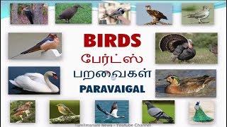 tamil birds name in english - मुफ्त ऑनलाइन