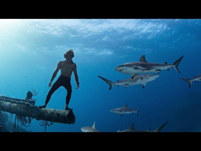 Sharks & Shipwrecks - Freediving The Bahamas (Tiger Sharks, Hammerhead Sharks, Reef Sharks)