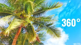 VR 360 Beach Virtual Reality Ocean Palm Trees Relaxing Google Cardboard