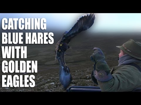 Catching Blue Hares with Golden Eagles