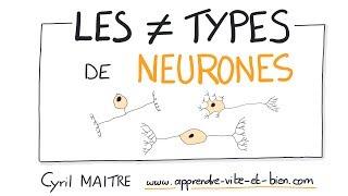 Vignette de NEUROSCIENCES EN DESSINS : Quels sont les différents types de neurones ?