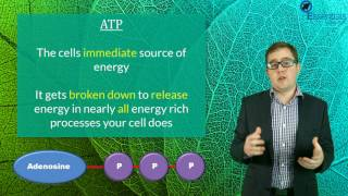 Essentials Concept Video - Energy in Cells