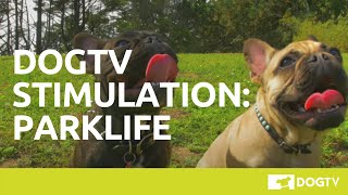 DOGTV Stimulation: Parklife (Sample) Visit DOGTV.com for a risk-free trial
