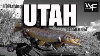 "W4F - Fly Fishing Utah ""Green River"""