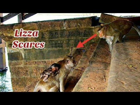 Pitiful Mom & baby Lizza try to escaped from bad monkey, Bad monkey try catches baby Lizza