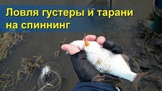 О рыбной ловля плотвы осенью на спиннинг