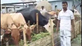 Banglar Krishi Episode no 264 (Hydroponic Culture BARI+ Successful Cattle Farm)