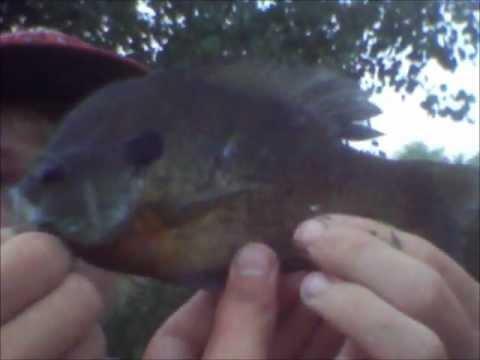 RCF: Pond Fishing Ep.16: LIVE Frog Fishing
