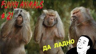 ПРИКОЛЫ С ЖИВОТНЫМИ - FUNNY ANIMALS 21