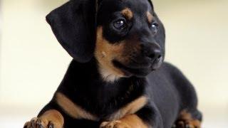 Какая Порода Собак Самая Умная?