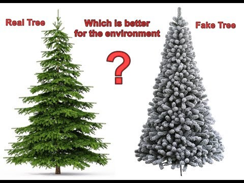 Christmas Tree Types.Which Type Of Christmas Tree Is Better For The Environment