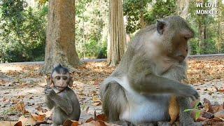 Look Baby Monkey Dito Too Small But Mom Daisy Too Big, Good Job Baby Dito