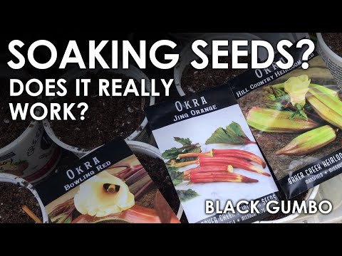 , title : 'Does Soaking Seeds Speed Germination?    Black Gumbo