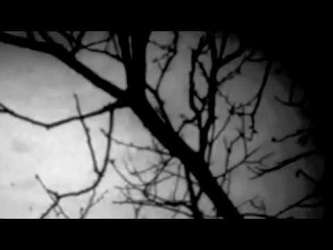Chilocaloria sullanalisi da sera su uova un verme