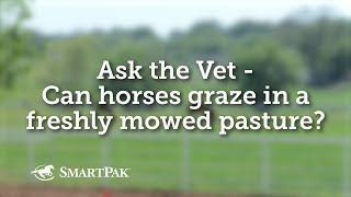 Ask the Vet - Can horses graze in a freshly mowed pasture?