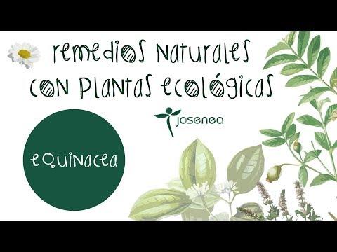 Equinacea Bio Horeca  Granel 150 Gr.