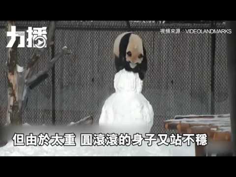 花樣玩雪人 萌化網友