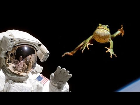 animals competing for space in real life