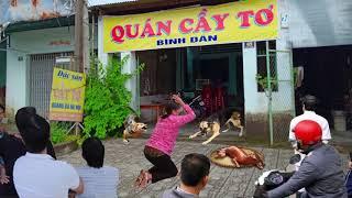 Bà Chủ Nhà Mua Thịt Chó Về Đãi Khách Tới Chơi, Mở Giỏ Ra Thì Tá Hỏa Nhìn Thấy…