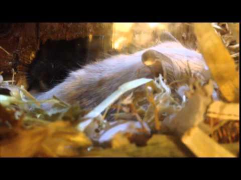 Die Parasiten auf den Libellen