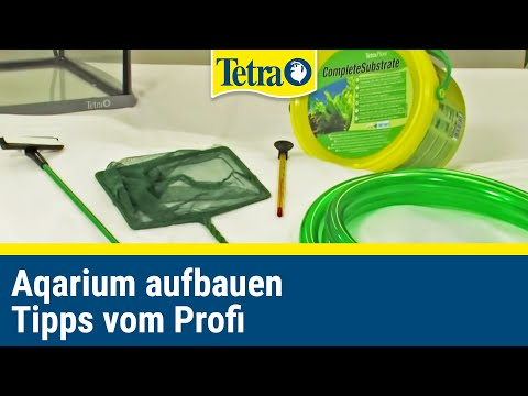 Aquarium aufbauen I Tipps vom Profi!