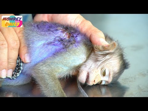 Much poor Lizza with deep wound check & add medicine | Baby was safe now at WLA | Monkey Daily 4605