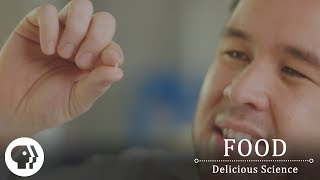 FOOD – DELICIOUS SCIENCE   The Food That Powers Half The Planet   PBS Food