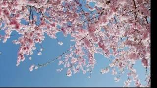 Enon -ไม่มีฤดูใบไม้ผลิ (Spring kidding) [Official Music Video]