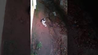Gato Trançando