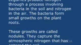 91VOA英語を学ぶマメ科植物人と土壌に良い