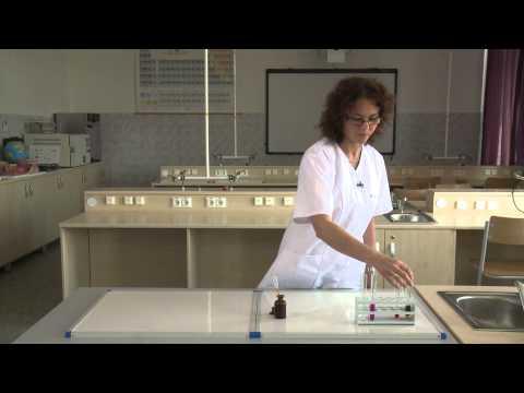 Korbféreg morfológiája