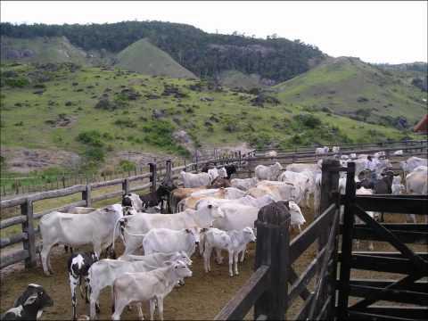 Ouvir Fazenda do Pau D'alho