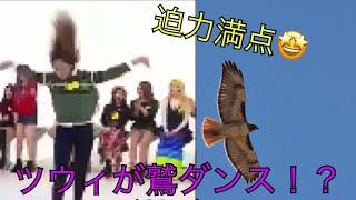 ツウィが鷲ダンス!?恥ずかしがる姿が可愛すぎる😳