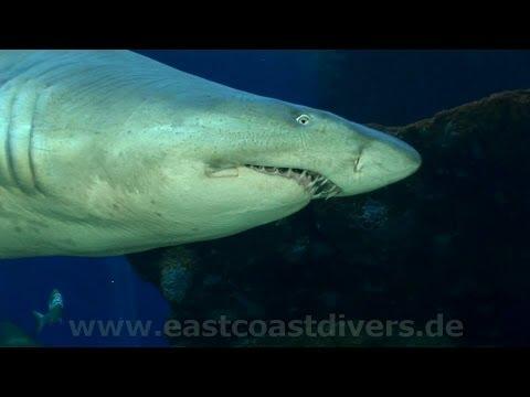 Tauchen mit Haien, La Palma Aquarium,Spanien
